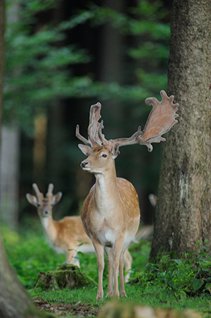 Wildpark Poing Park Tiere